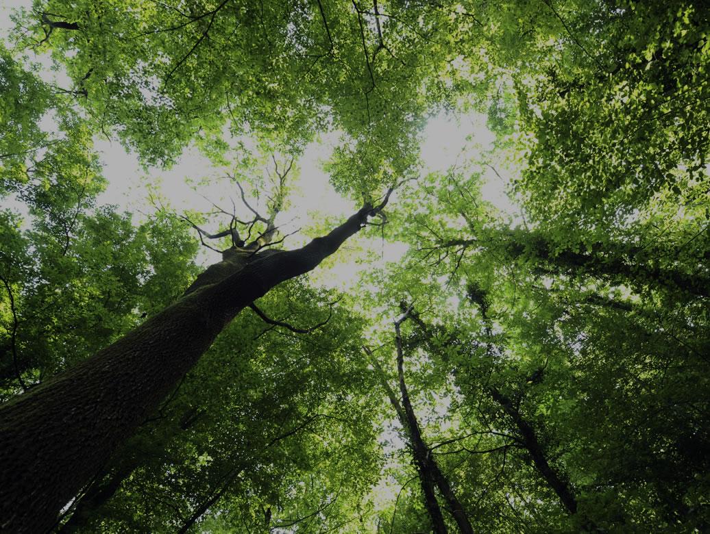 Calidad & Medio Ambiente